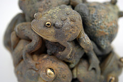a-knot-of-toads