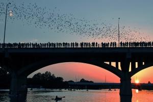 austin-bats-bridge
