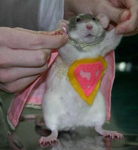 Super Rat – Commonplace Fun Facts