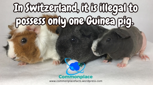 In Switzerland, it is illegal to own only one Guinea Pig.