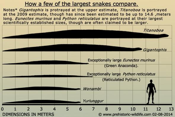 giant-prehistoric-snakes