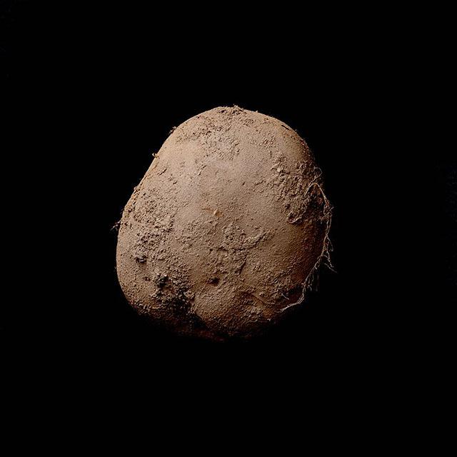 Potato Photo