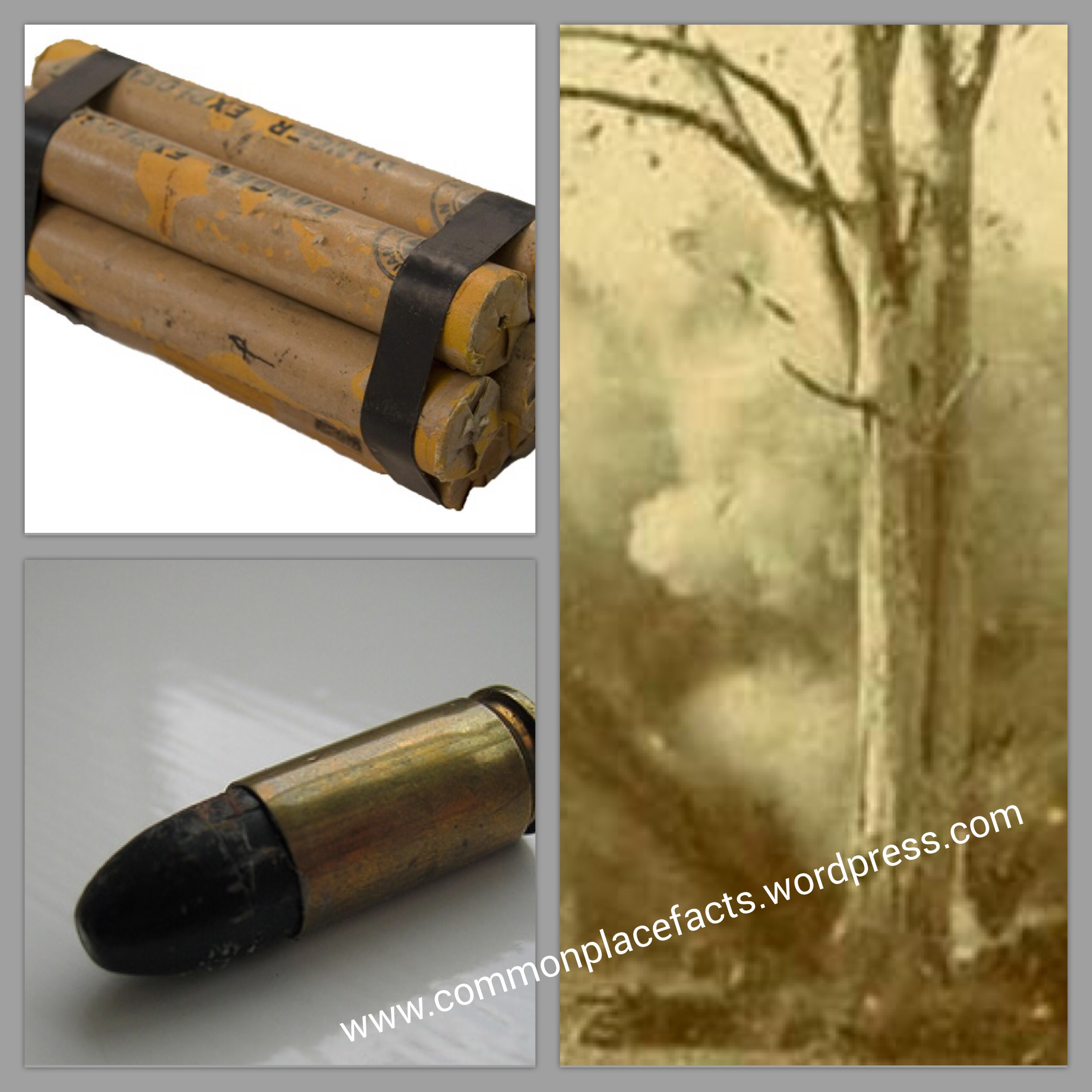 ziegland exploding tree bullet coincidence