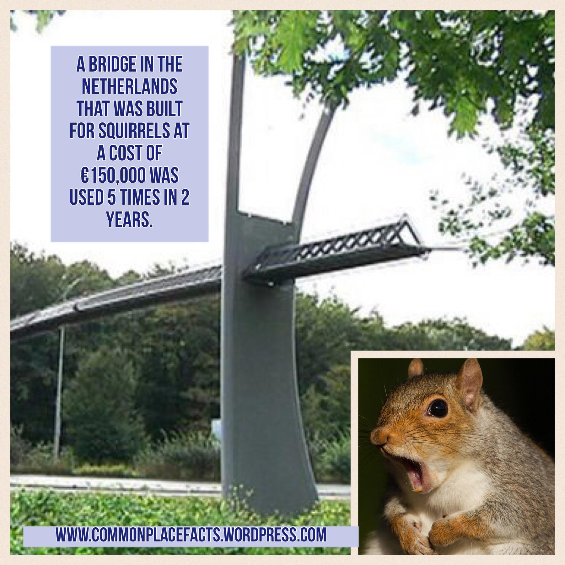 Holland bridge for squirrels