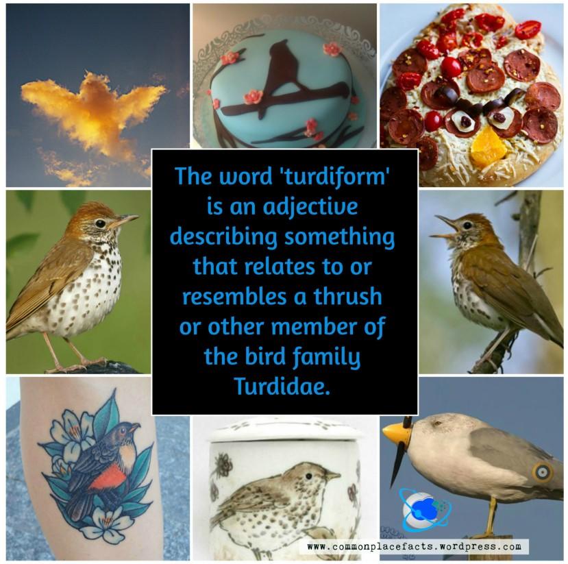 turdiform resembling or relating to thrush