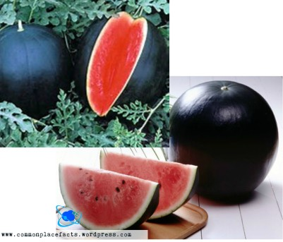 most expensive watermelon