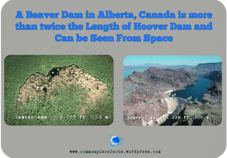 World's largest beaver dam twice size of Hoover dam