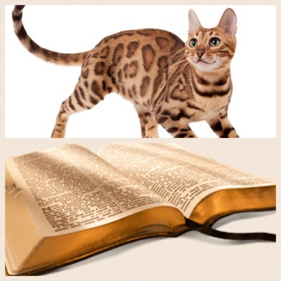 Only domesticated animal not referenced in Bible