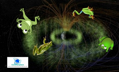 frogs levitate in a strong-enough magnetic field