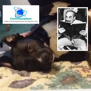 """Outside of a dog, a book is man's best friend. Inside of a dog it's too dark to read.""—Groucho Marx"