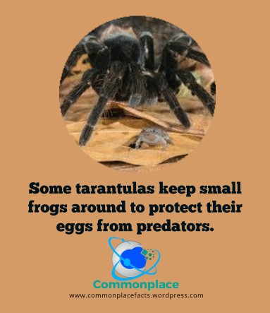 #funfacts #spiders #pets #frogs #tarantulas