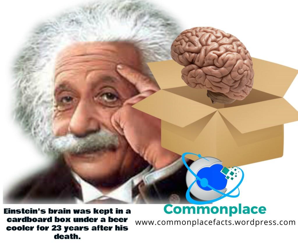 #Einstein #brain #funfacts #autopsy