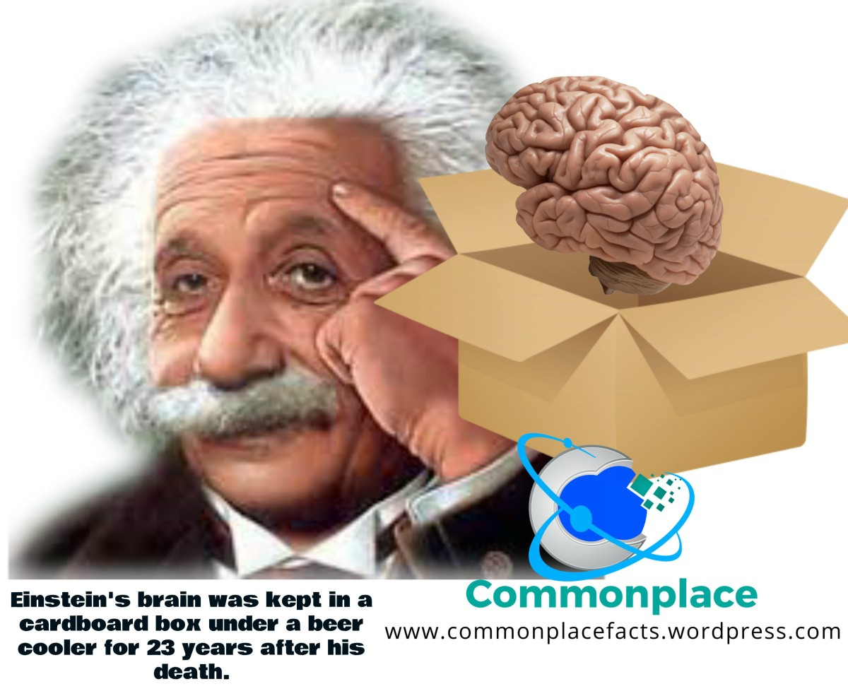 Einstein's Brain: Thinking Inside the Box