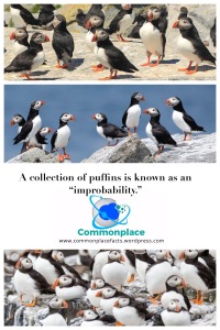 #puffins #improbability #taxonomy #animals #funfacts