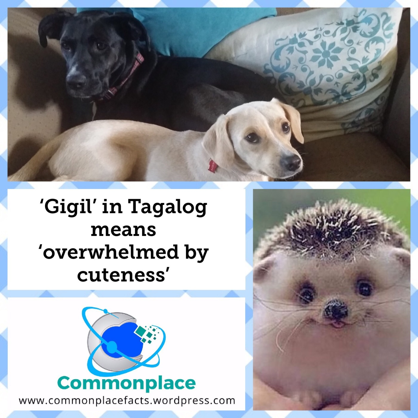 #gigil #tagalog #cuteness #cutenessoverload