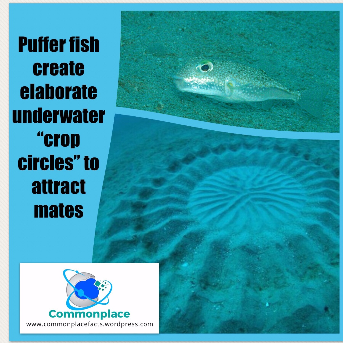 Meet the Artist of the Underwater Crop Circles