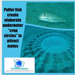 #cropcircles #pufferfish #natureart #funfacts
