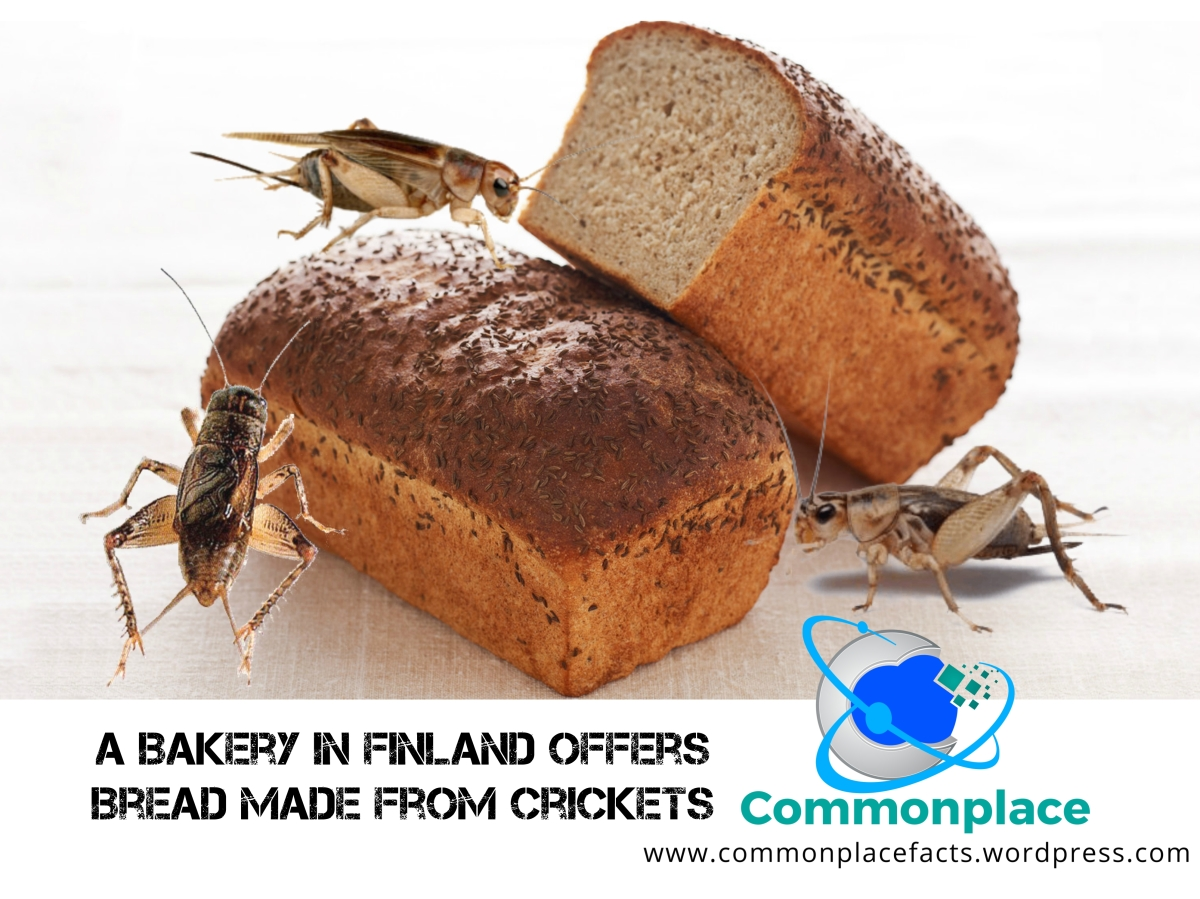 Does the Thought of Cricket Bread Bug You?