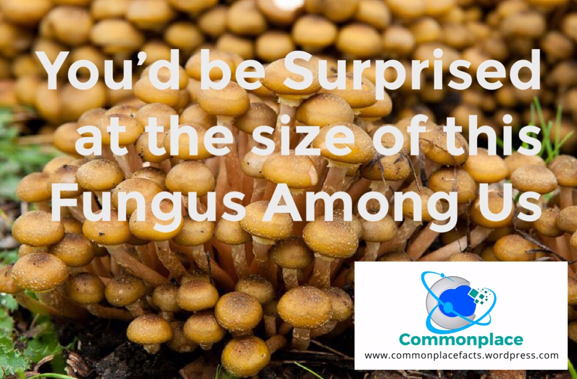 A Fungus Among Us Is the Largest Living Thing On the Planet