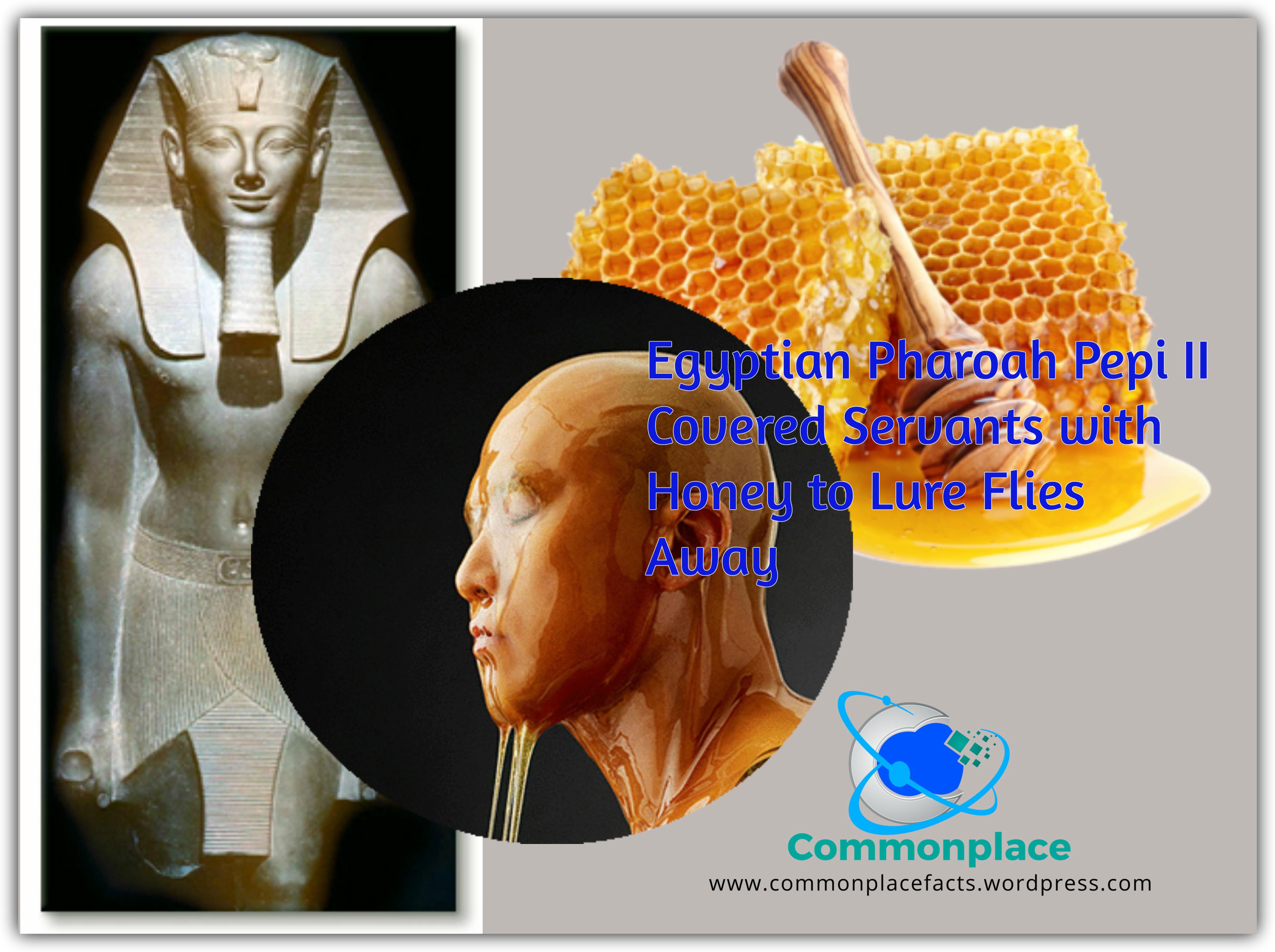 Egyptian Slaves Honey