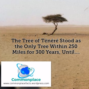 The Tree of Ténéré stood as the only tree within 250 miles for 300 years, until ....