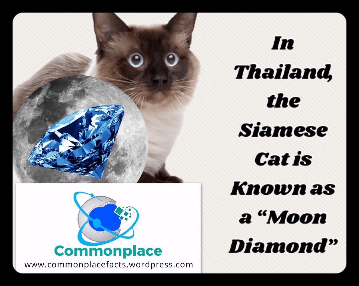 #siamesecat #cats #thailand #diamonds #moon #languages