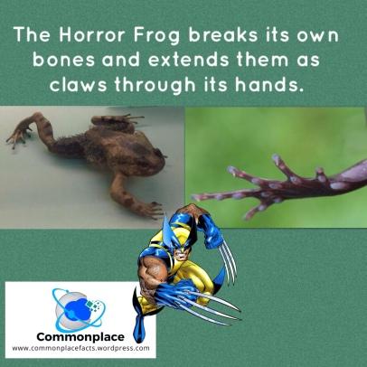 #frogs #Wolverine #Marvel #MarvelComics #hairyfrog #animals #comicbooks