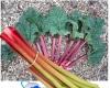 #rhubarb #botany #funfacts #accoustics