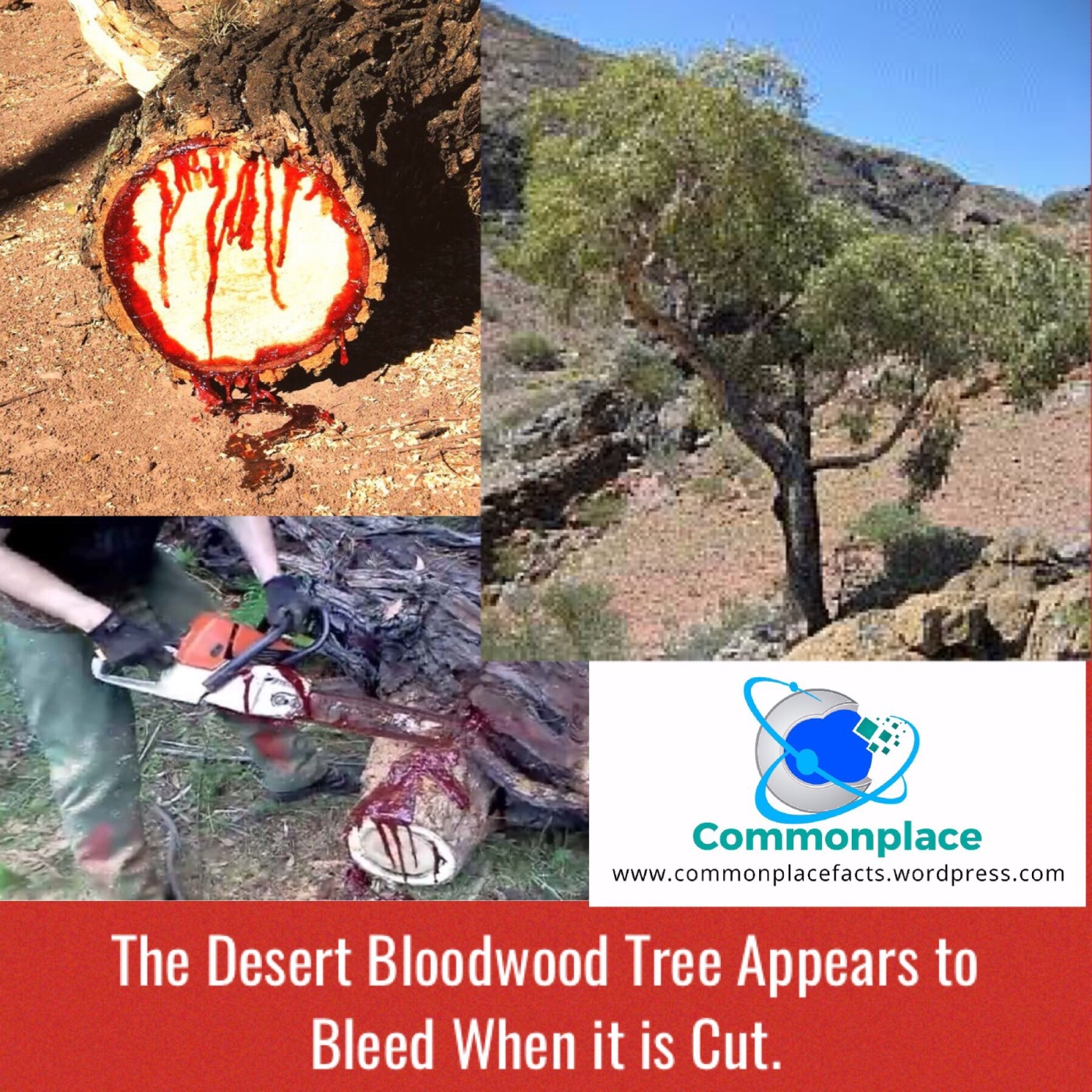 #bloodwood #blood #nature #trees #natureiscool