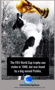 #FIFA #dogs #WorldCup #heroes #soccer #football