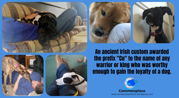 #dogs #Irish #loyalty #MansBestFriend