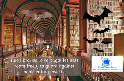 #books #bats #libraries #Portugal #PestControl