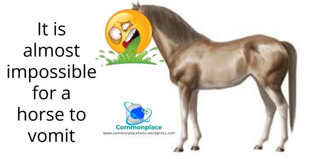 #horses #vomit #puke