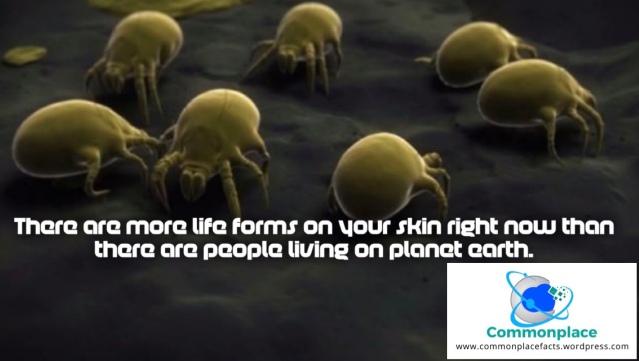 #bacteria #life #biology #skin #funfacts