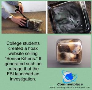 #MIT #Bonsaikittens #bonsaikitten #hoaxes #students #cats