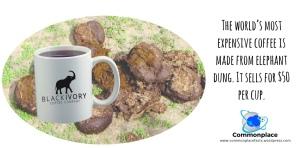 Black Ivory Coffee, elephant coffee, most expensive coffee, coffee