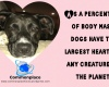 #dogs #hearts #body mass #funfacts