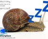 #snails #sleep