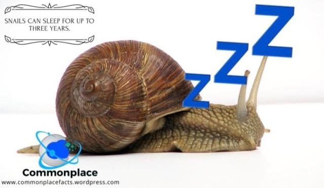 #snails #sleep