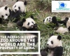 Every panda in every zoo in the world belongs to China