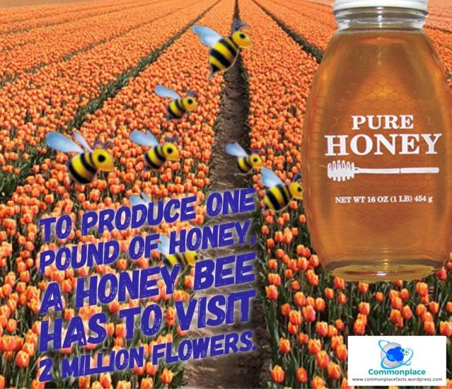 #honeybees #honey #bees #flowers