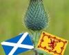 #thistles #Scotland #flowers #History #NationalFlowers