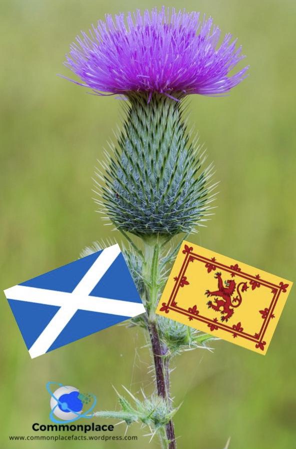 #Scotland #flowers #thistles #nationalflower #symbols #history