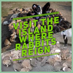#RabbitIsland #Japan #rabbits