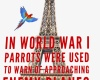 #WWI #airplanes #parrots #Paris #EiffelTower