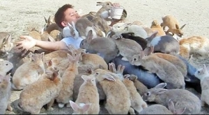 Rabbit Swarm