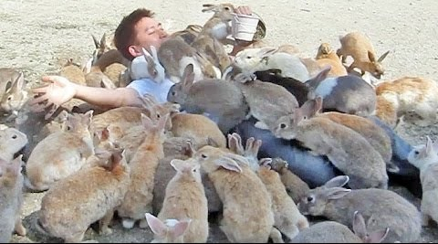 Rabbit Swarm