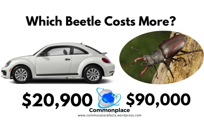 A 2019 Volkswagen Beetle costs $20,900. A stag beetle costs $90,000 #cars #insects #Volkswagen #StagBeetles #beetles #economics #collections