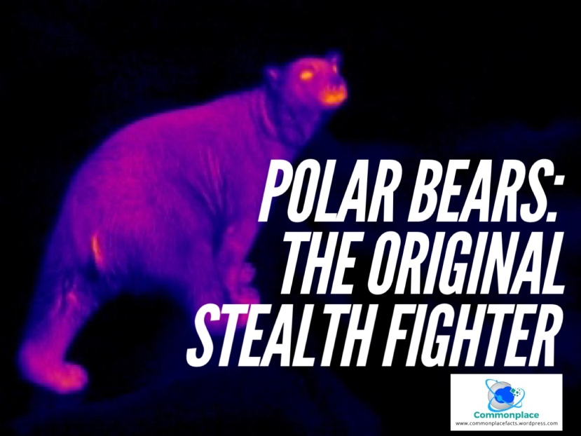 Polar Bears: the original stealth fighter