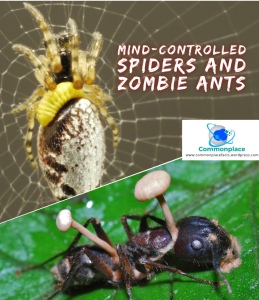 Mind-controlled spiders and zombie ants